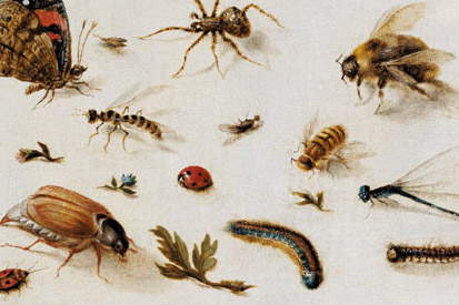 Collection of Insects canvas und stuides from famous artists.