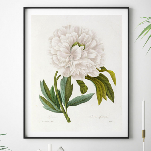 Buy online graphic illustrations of botany