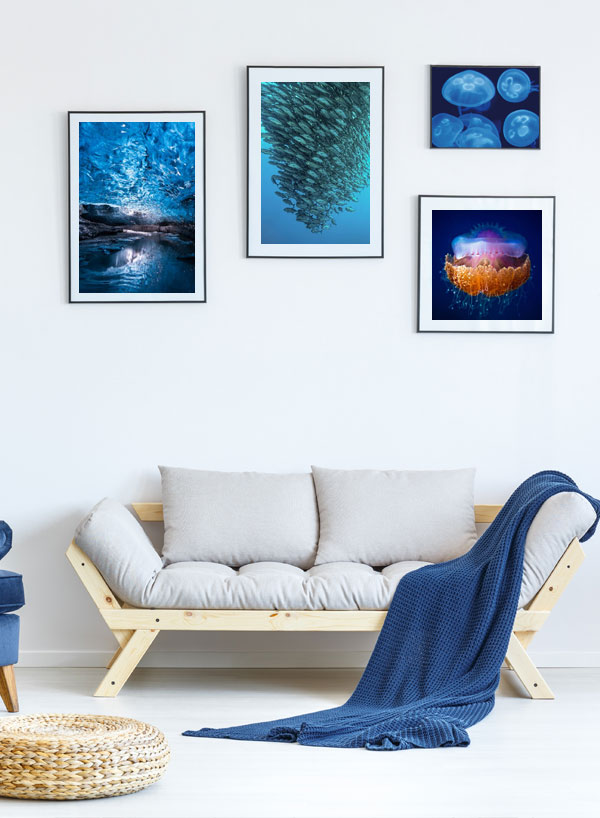 Underwater photographs as wall pictures in the living room