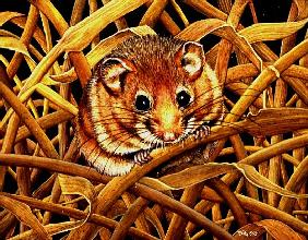 Edible Dormouse, 1993