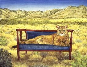 Millers'' Mountain-Lion