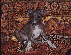 My Whippet Baby, 1994