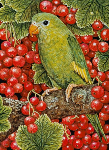 Redcurrant-Parakeet, 1995 (acrylic on panel)