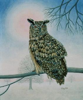 Winter-Owl