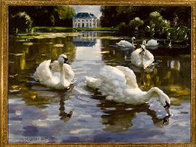 Swans in Nymphenburg