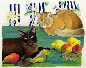 Cats with fruit