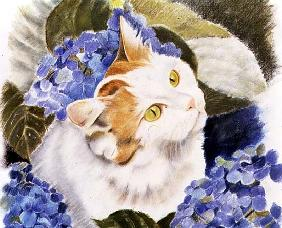 Turkish Van (pastel on paper)