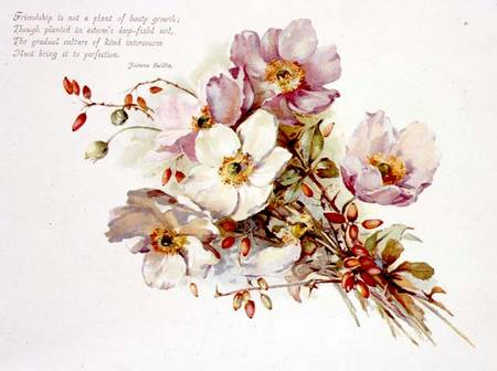 Victorian Book Illustration Of Flowers