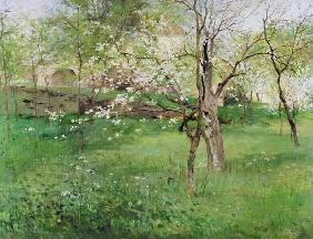 Blossoming orchard at Okor