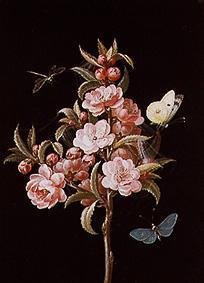 Japanese quince (or cherry) with dragon-fly and butterflies