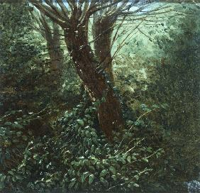 Carus, Carl Gustav : Tree Study with Thicket