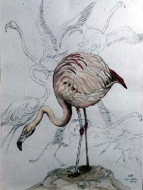 Flamingo (pencil and w/c on paper)