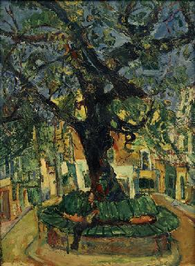Large Tree in Vence