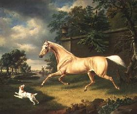 A Palomino frightened by an oncoming storm with a Spaniel