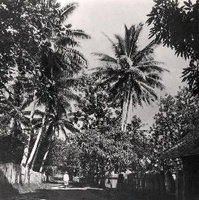 A Street in Papeete, from ''Tahiti'', published in London, 1882 (b/w photo)