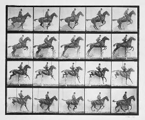 Man and horse jumping a fence, plate 640 from ''Animal Locomotion'', 1887 (b/w photo)