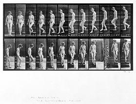 Woman descending steps, plate 137 from ''Animal Locomotion'', 1887 (b/w photo)