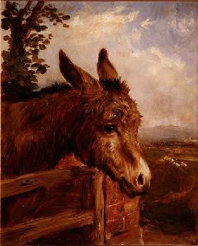 A Donkey at a Gate