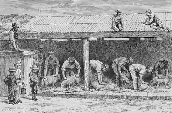 english school   sheep shearing