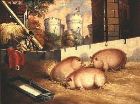 Three Pigs with Castle in the Background