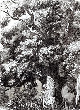 Charles II (1630-85) Hidden in the Oak Tree, 14th October 1651 (engraving) (b&w photo)