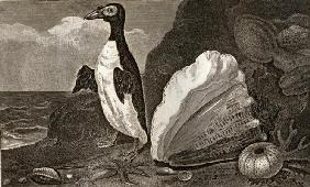 The Penguin with the conch and other shells and sponges (engraving)