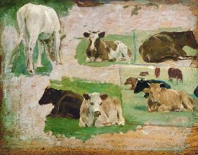 Boudin, Eug�ne : Study of Cows