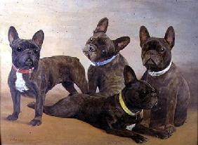 Four French Bulldogs (panel)