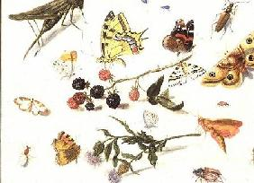 Study of Insects, Flowers and Fruits