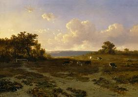 Heath Landscape with Cows
