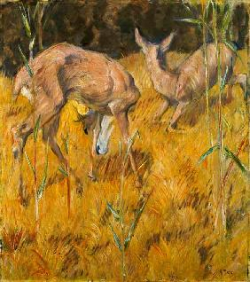Deer in the reed