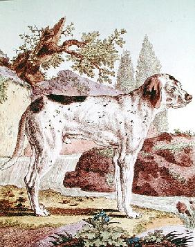 A Pointer, illustration from ''Histoire Naturelle'' Georges Louis Leclerc (1707-88) Count of Buffon,