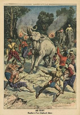 Catching a white elephant in Siam, illustration from ''Le Petit Journal'', supplement illustre, 10th