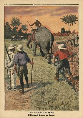 In French Congo, elephant trained to ploughing, illustration from ''Le Petit Journal'', supplement i