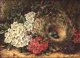Still life with bird's nest