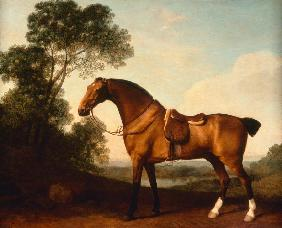 A Saddled Bay Hunter (Ein gesattelter Bay Hunter)