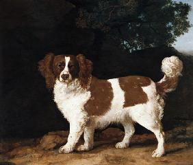 Fanny, the Favourite Spaniel of Mrs. Musters, Standing in a Wooded Landscape
