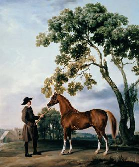 Pferdepfleger with the arab horse Lord Grosvenor