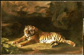 Portrait of the Royal Tiger, c.1770