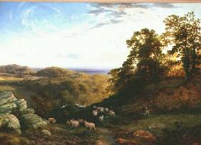 The Young Shepherd