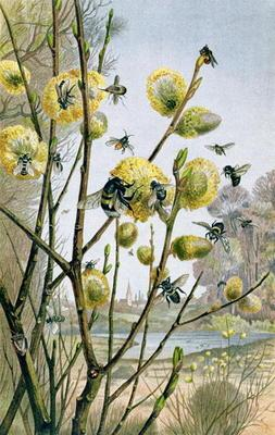 Spring in the Insect World, plate from Brehms Tierleben: Allgemeine Kunde des Tierreichs, vol.9, p.2