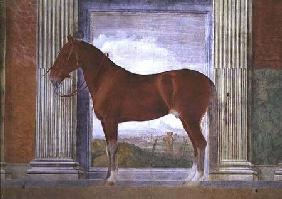 Sala dei Cavalli, detail showing a portrait of a grey horse from the stables of Ludovico Gonzaga III