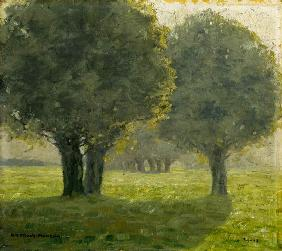 Cluster of trees in the sun haze. 1913