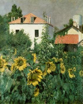 Sunflowers in the Garden at Petit Gennevilliers
