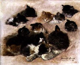 Ronner-Knip, Henrietta : Study of cats and kittens