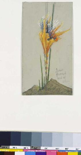 Fire flower II. (More Ground)