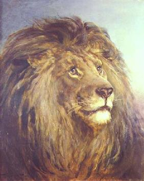 Hardy, Heywood : A Lion's Head