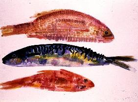 Three Fish, 1998 (w/c on paper)