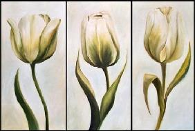 Three tulips 2001