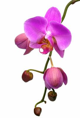 Orchidée exposition